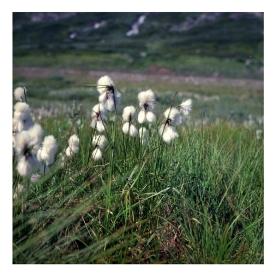 norwegen_91_006
