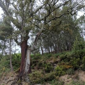 serra_de lousa_20170526_009