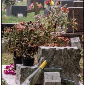 venedig_2019_0109_cimitero_010